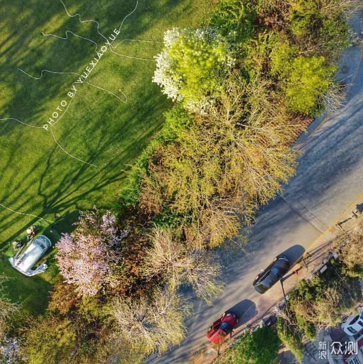 """这个春天带你""""飞过""""天津醉美海棠大道_新浪众测"""