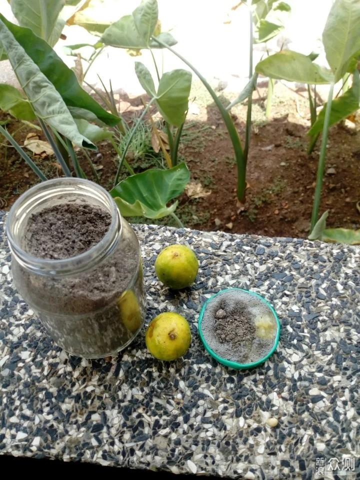几种天然防治害虫的方法,对有毒农药说不,学会有机养护室内植物