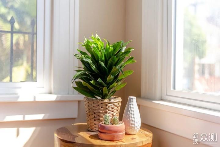 这13种盆栽植物可照亮家里低光照的环境