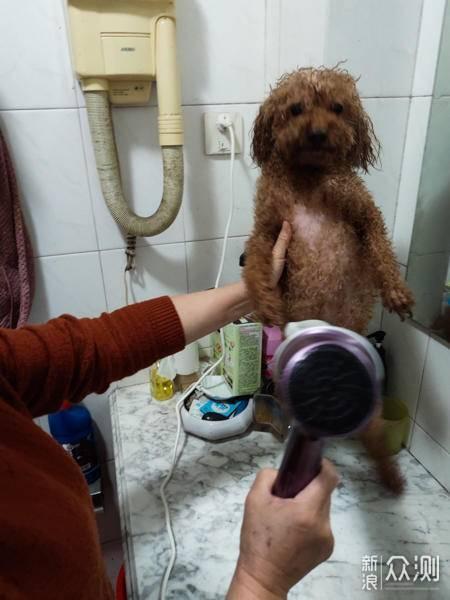 益生菌宠物清洁礼包轻体验_新浪众测