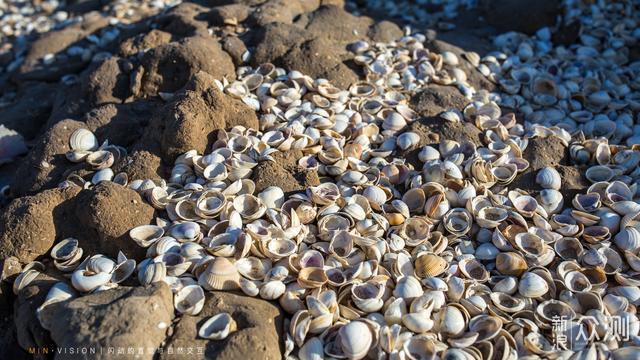 环渤海海岸带上,有一条绵延76千米的古贝壳堤_新浪众测