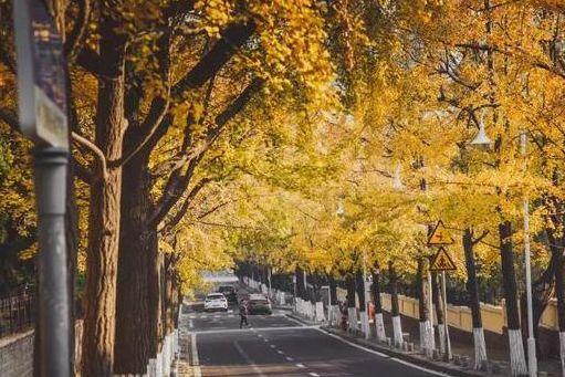 有一种美叫青岛的秋天!
