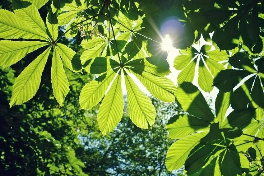 逆光拍摄,如何拍摄出晶莹剔透的树叶?