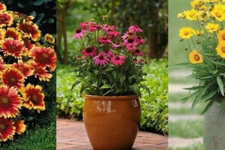 夏天在家里布置这15种耐旱植物