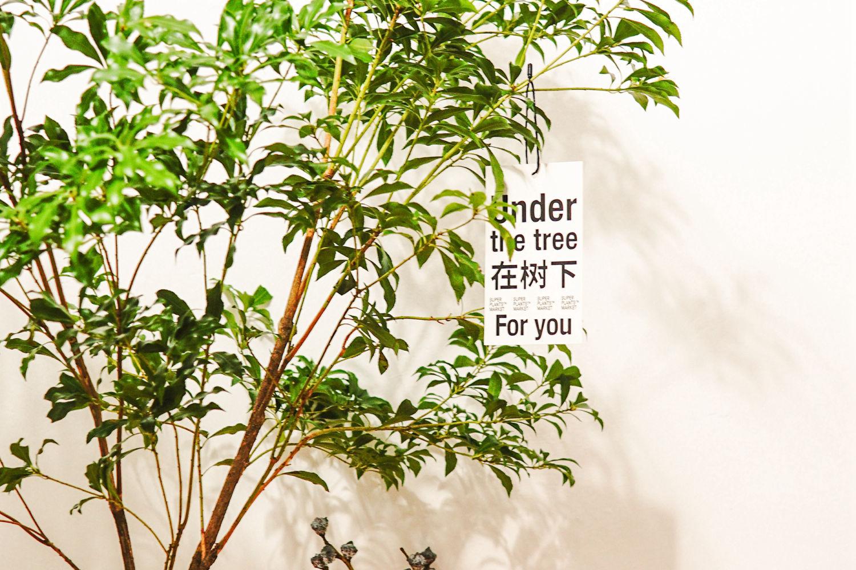 #创作新星#夏季鲜花不耐放,试试鲜切植物!