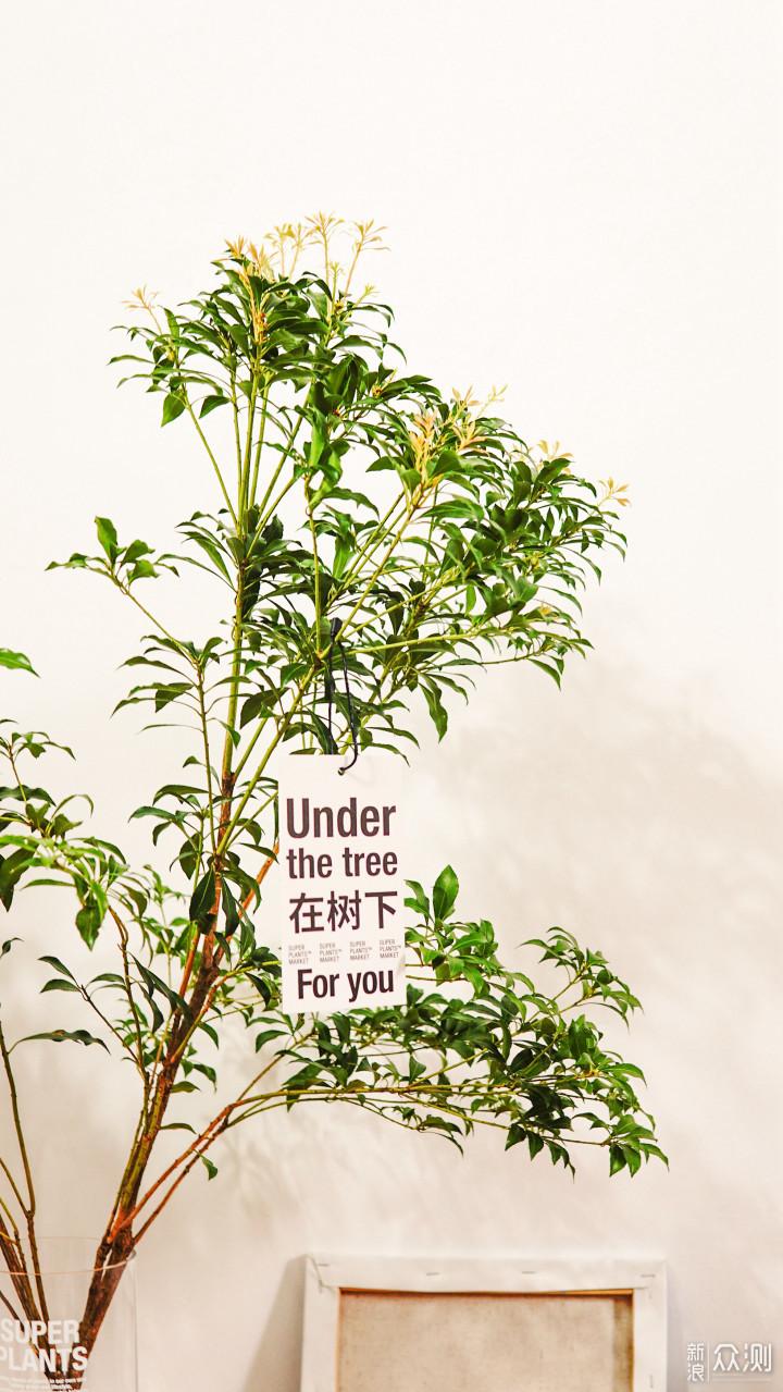 #创作新星#夏季鲜花不耐放,试试鲜切植物!_新浪众测