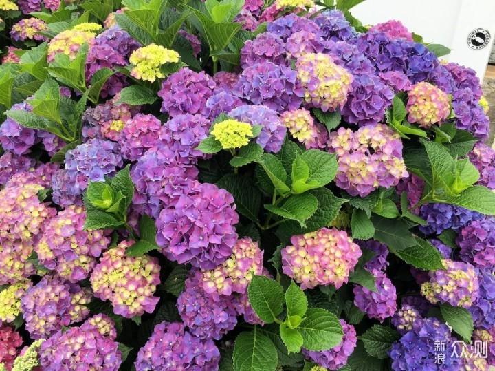 #创作新星#这8️⃣种庭院花卉植物,美翻了!_新浪众测