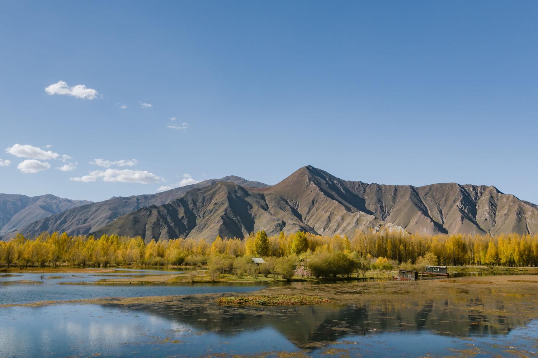#初秋#西藏旅行,从浓妆艳抹的秋色开始