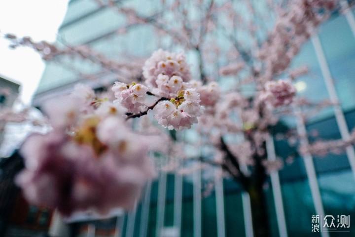 绝美樱花拍摄攻略,别去日本,下次飞加拿大!_新浪众测