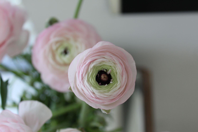 14种带香气花卉绿植, 绿意与香味提升幸福感