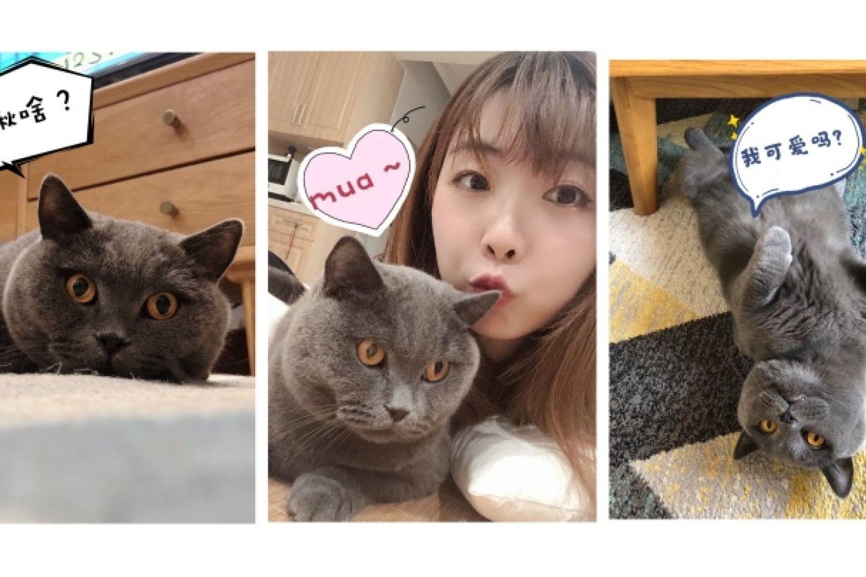 养猫指南进阶篇!8款智能好物提高养宠幸福感
