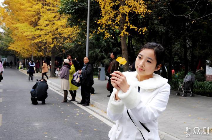 成都市区银杏观赏地推荐,暖冬美景必看!_新浪众测