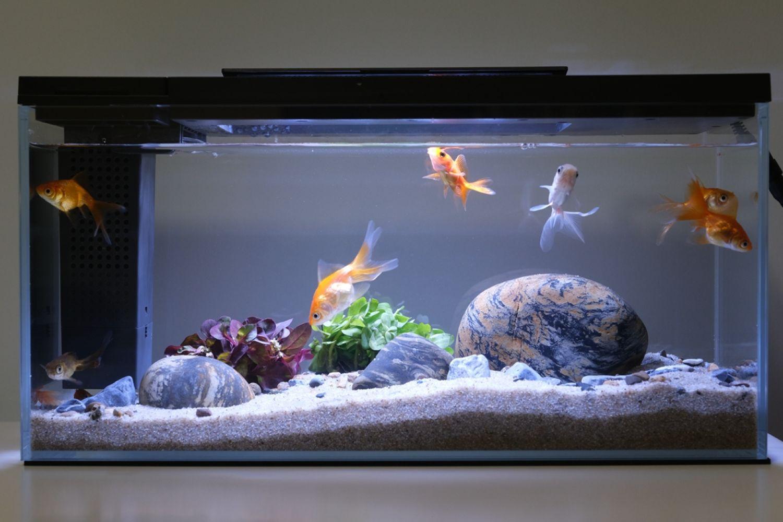 小小水空间,生活添乐趣,小佩起源纪智能鱼缸