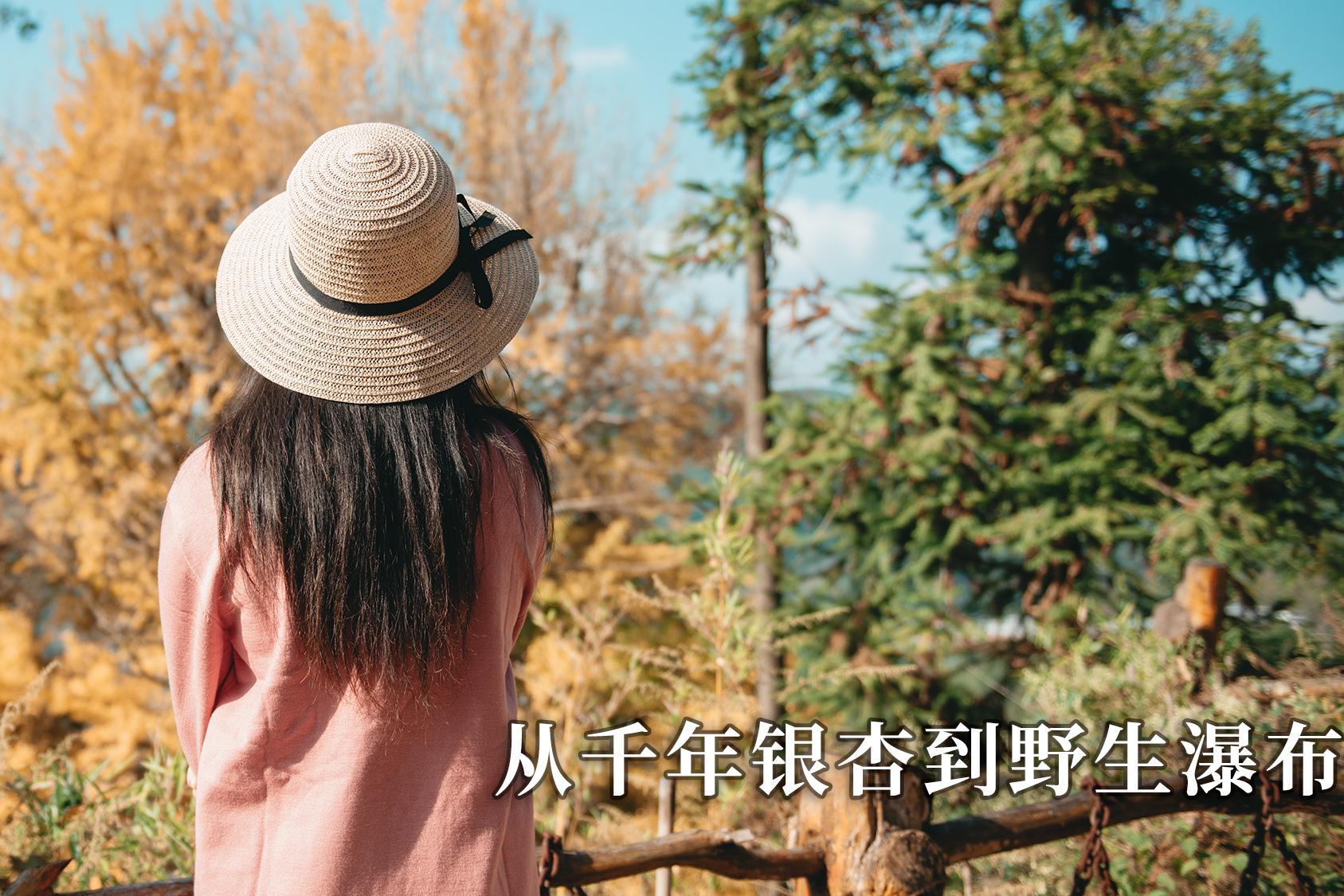 vlog| 贵州的银杏和瀑布就是这么美!