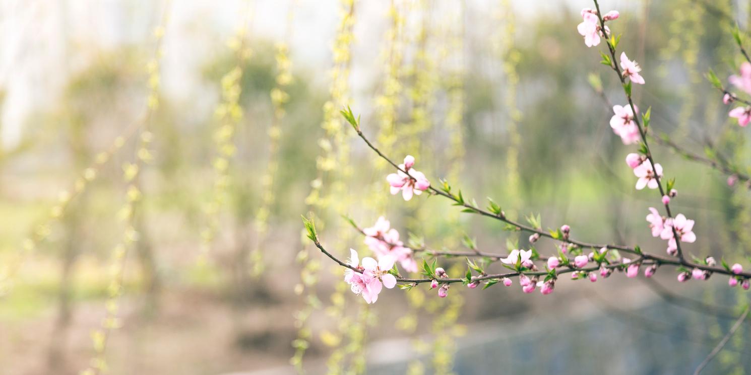 hello,春天
