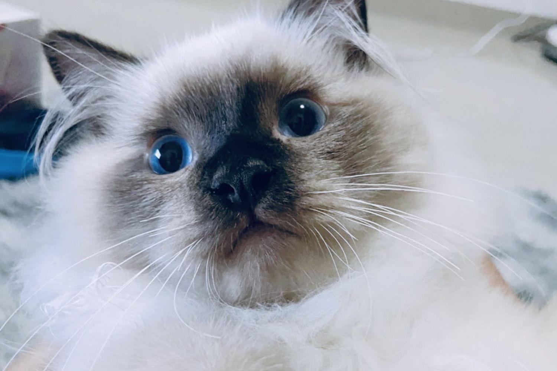 国产猫粮崛起,拯救软便玻璃胃?三只小宠猫粮