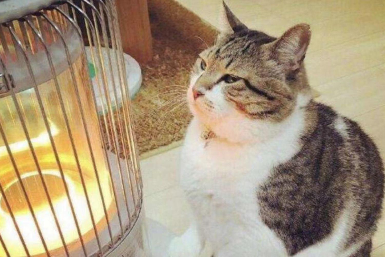 取暖不给力的解决方案---远红外线电暖器横评